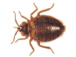 Bed_Bug_Heat_Treatment-300x225
