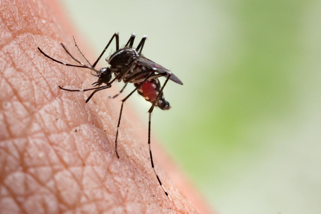 Professional Backyard Mosquito Control Options