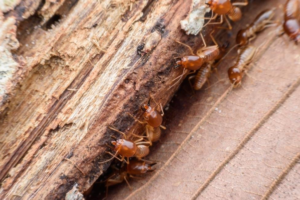 6 Steps to Keeping Your Home Termite Free