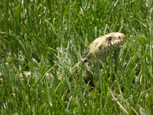 How to Keep Snakes Away from Your Yard and Home