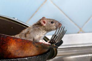 mice pest Control