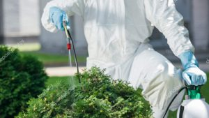 spraying pest control