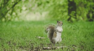 Squirrel questions