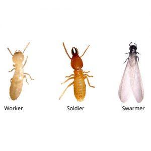 Subterrarean Termites pest control