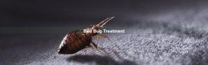 Bed Bug Control