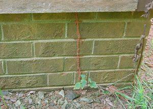Termite Tube Outdoor