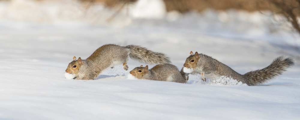4 Winter Pests and How to Protect Your Home