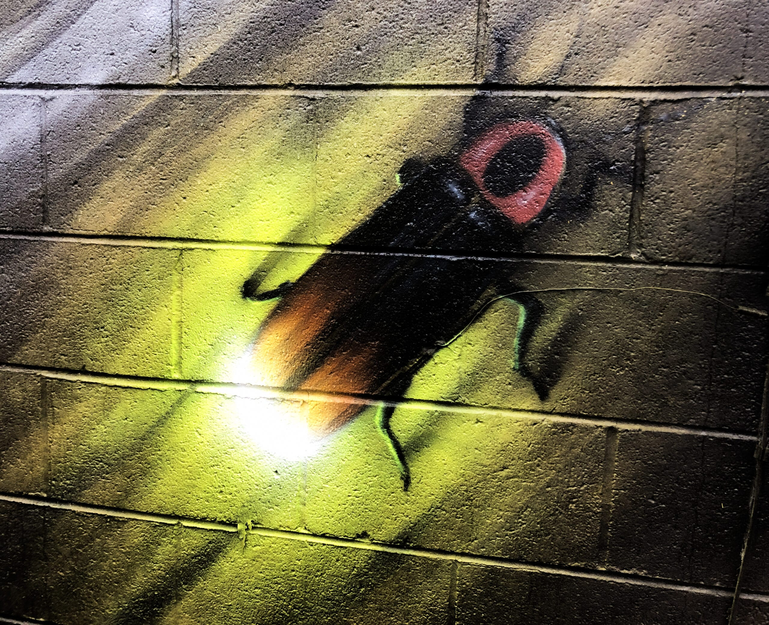 Spray Painted Image of Firefly