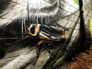 roach on pest control mural