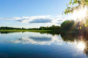 Lake with pests
