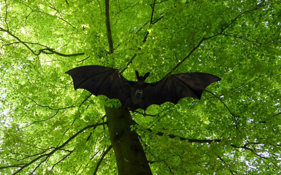 Learn About Bats & See How They Live