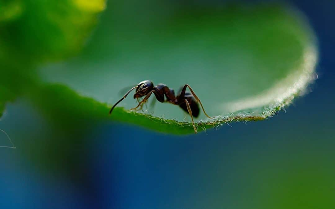 Learn About Different Ants And What To Expect