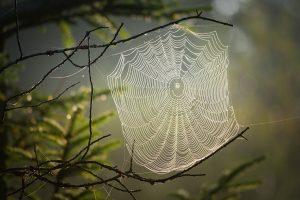 Spider Information