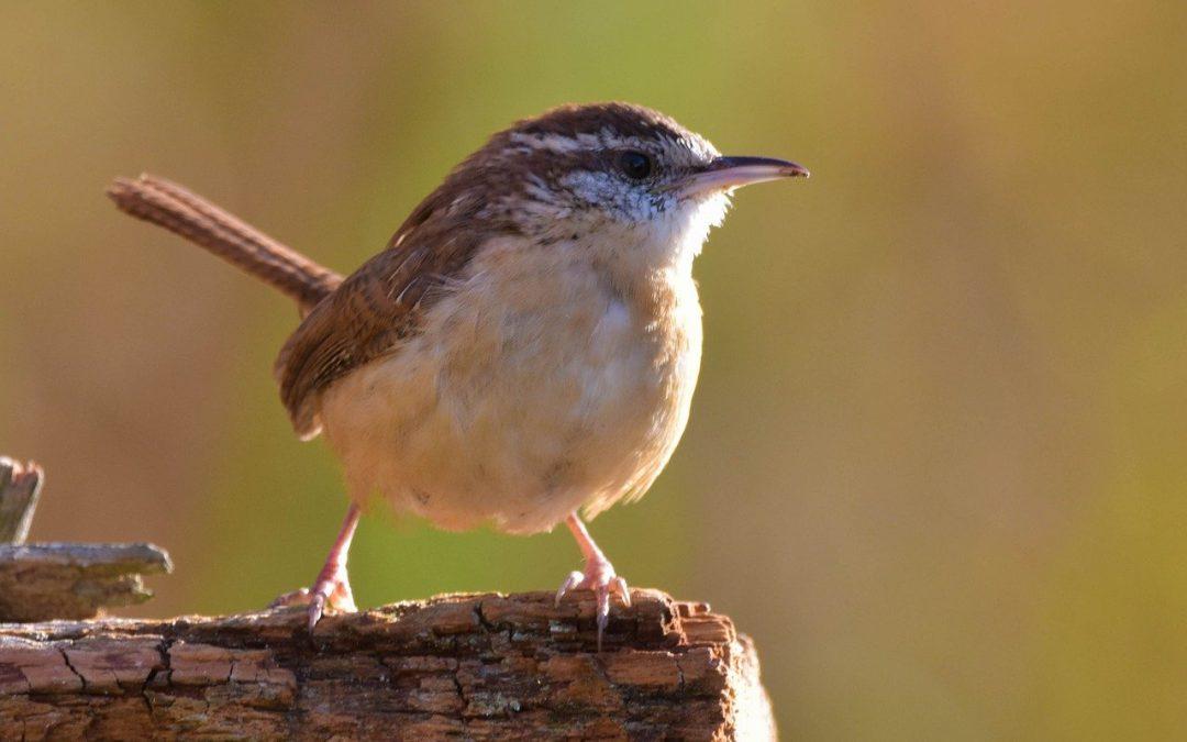 Common North Carolina Bird Species – Birds You May See In NC