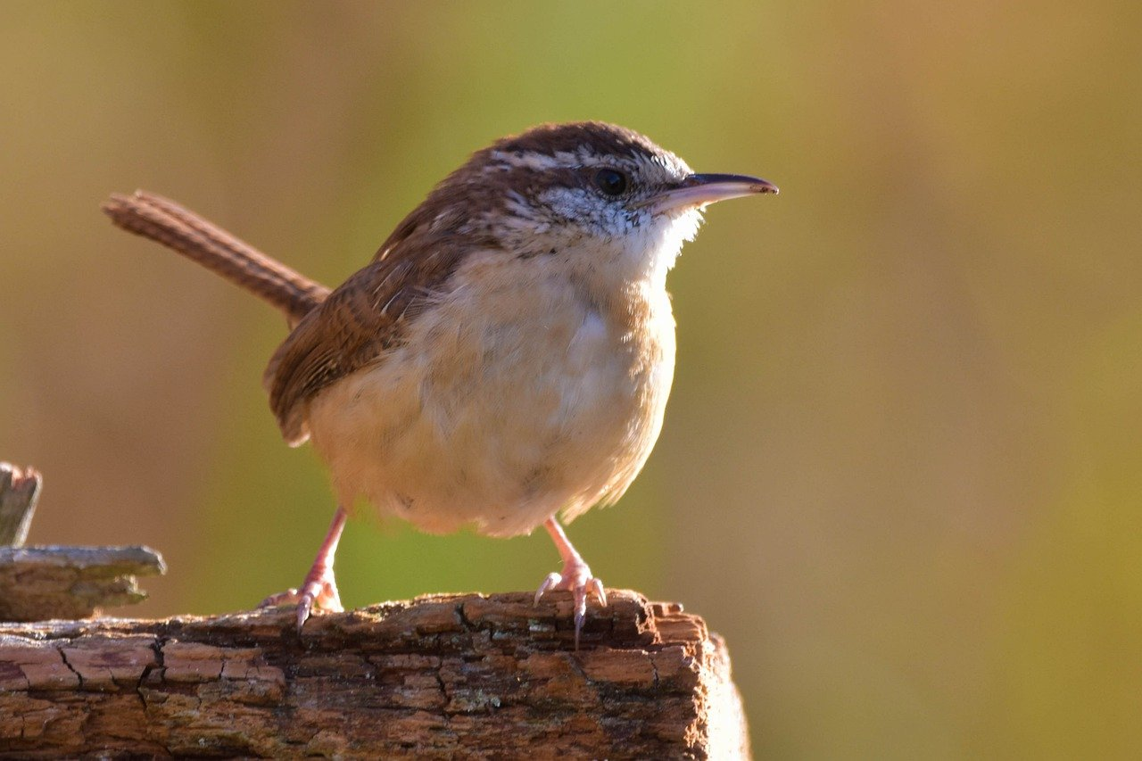 Common North Carolina Bird Species - Birds You May See In NC