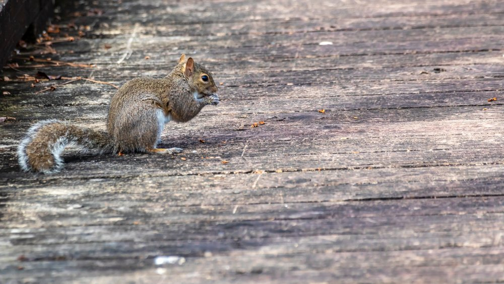 Learn about Squirrels | See How They Live